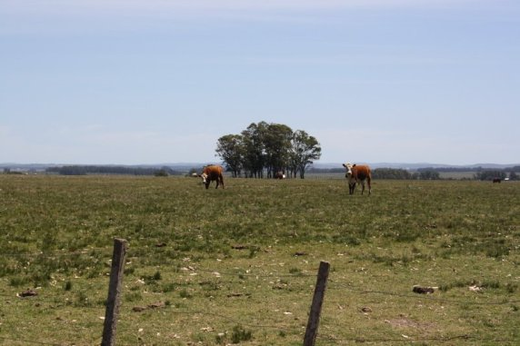 5218-35Ha-Land-close-to-Las-Garzas-Rocha