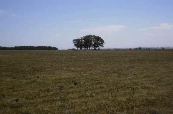 5218-Fields-of-35Ha-Land-close-to-Las-Garzas-Rocha