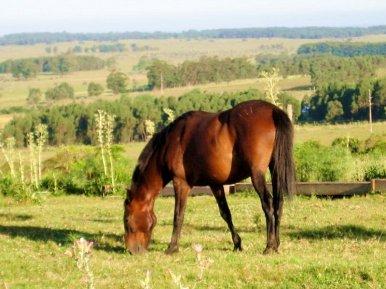 5406-Horse-on-Historic-Ranch-near-Cabo-Polonio