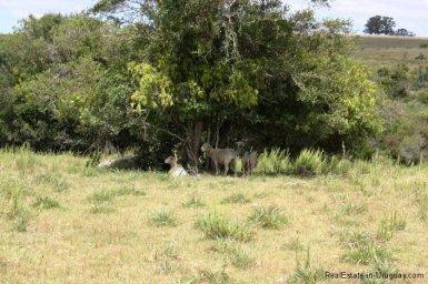5089-Fields-of-Chacra-Jose-Ignacio-Area