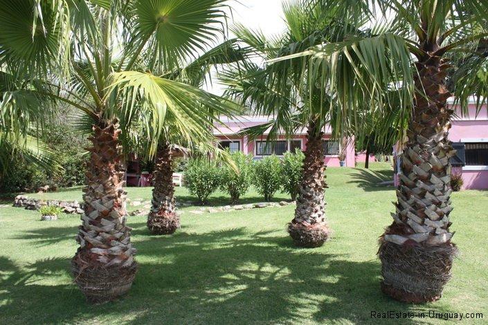 5196-Palms-of-Chacra-Punta-Ballena-Area