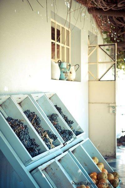 Carmelo-Uruguay-Wine
