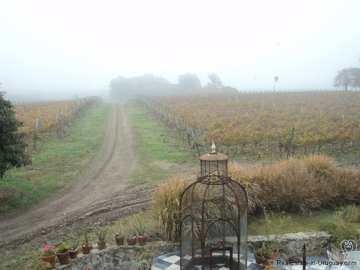 Carmelo-Uruguay-Wineries