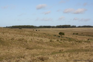 5650-Land-Garzon-Area2