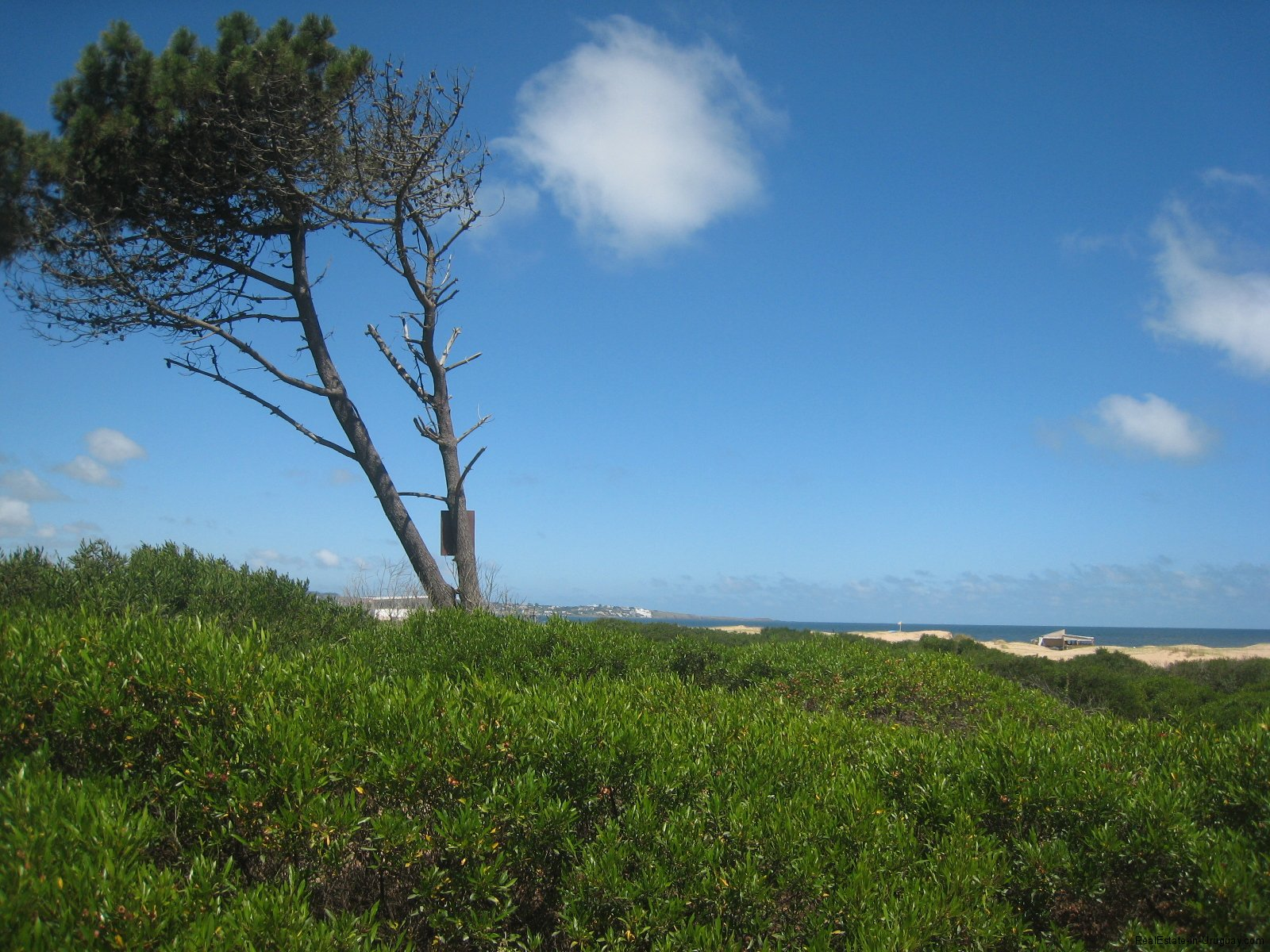 Seaside Plots Chihuahua beach | Realestate in Uruguay