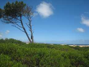 5745-View-towards-Punta-from-Seaside-Plots-Chihuahua-beach