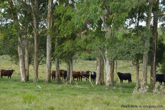 5791-Cattle-Farm-by-Zapican-Cows