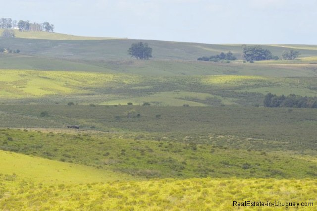 5791-Cattle-Farm-by-Zapican-Hills2