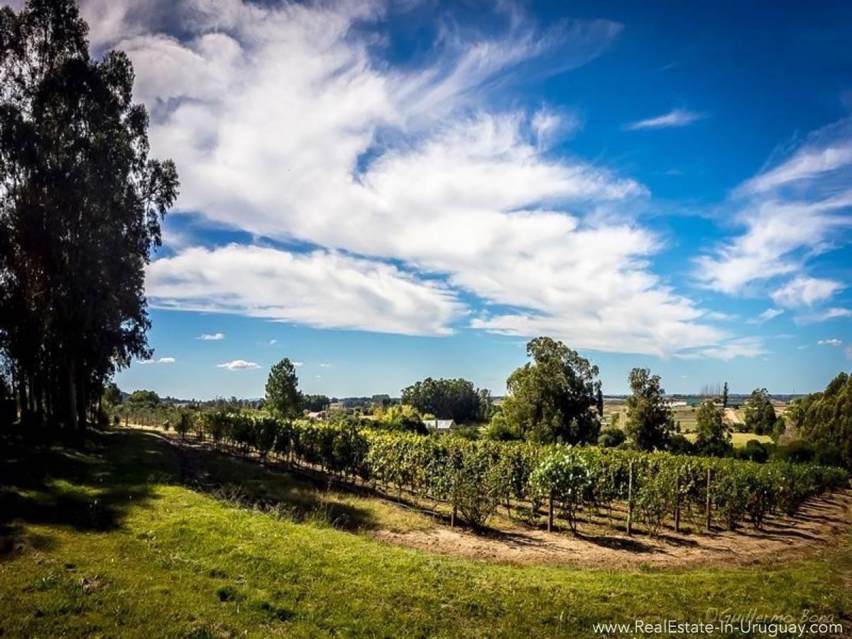 Beautiful Estancia with Vineyard - Vineyard