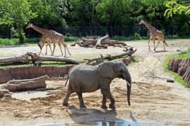 Uruguay Zoo