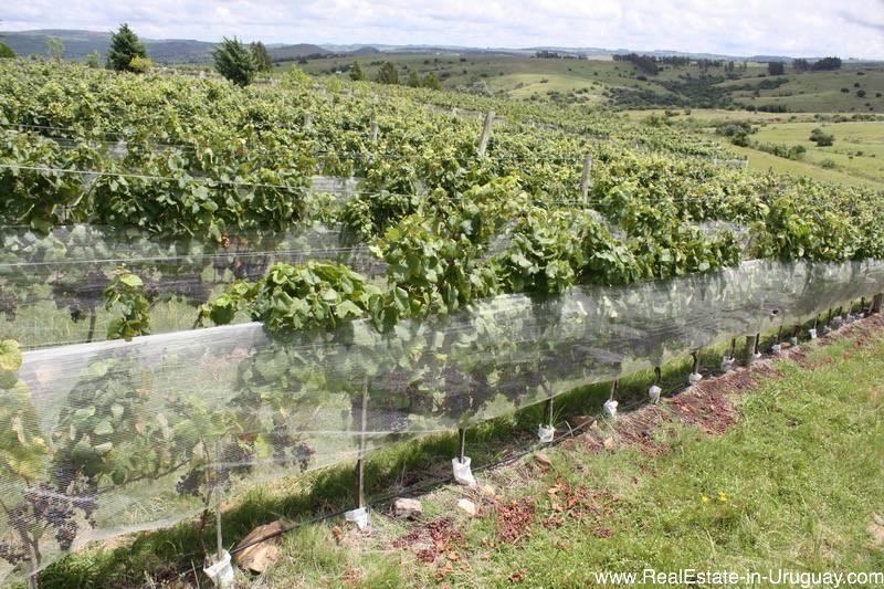 Small Winery Estancia in Pueblo Eden