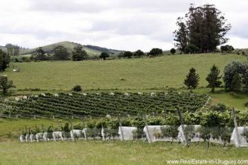 Small Winery Estancia in Pueblo Eden