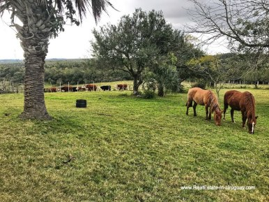 Horses of 115 Hectares with a Restored old Building in Garzon