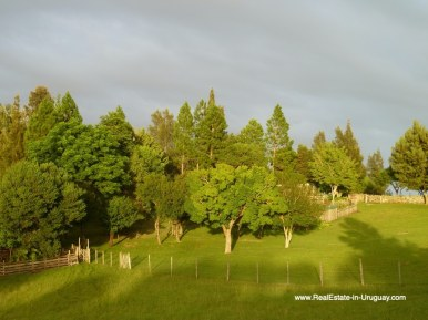 Trees of Farm House in the Pueblo Eden Area