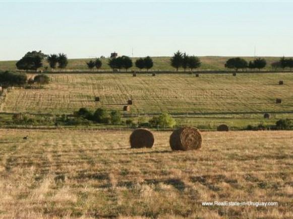 Land of Large Estate near Jose Ignacio with 70 Hectares Land