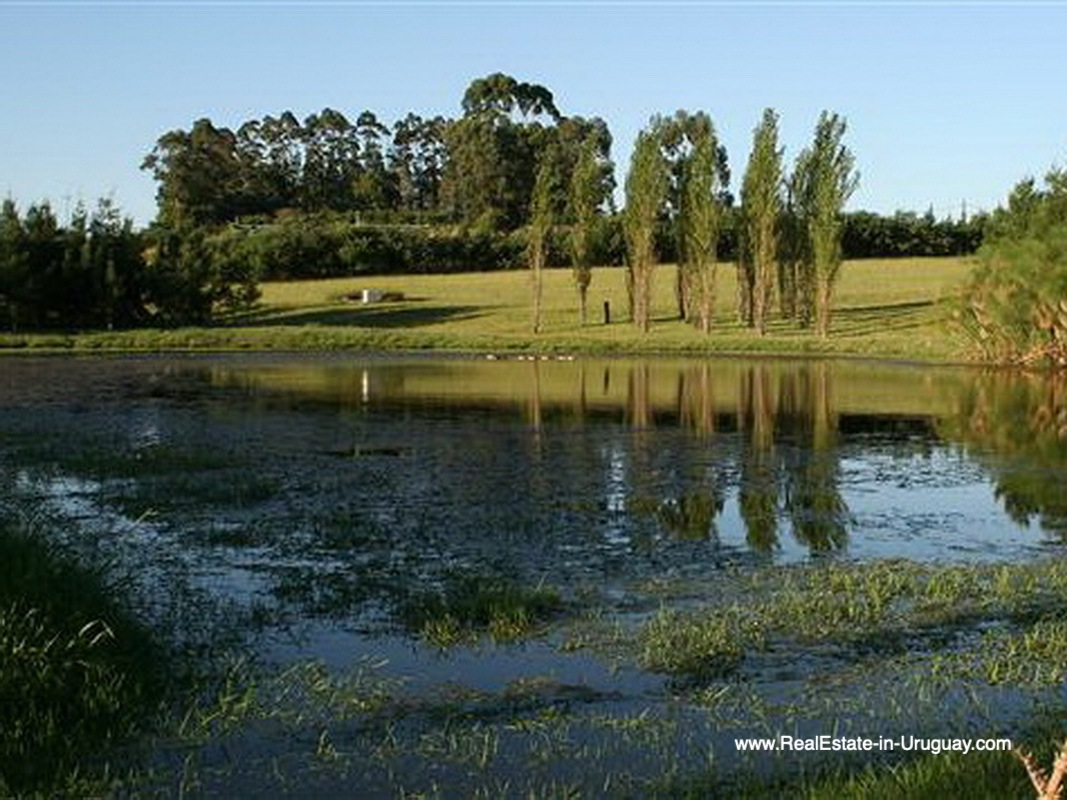 Pond of Large Estate near Jose Ignacio with 70 Hectares Land