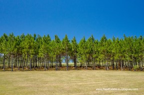 Treeline of Exclusive Plot within Fasano near La Barra