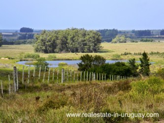 View of Farm with 95 Hectares just 15 Minutes from Jose Ignacio