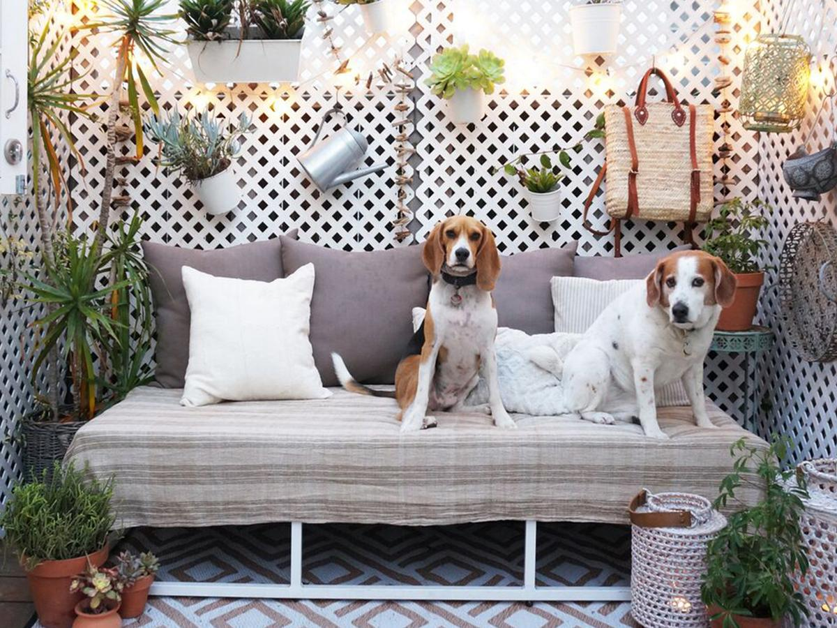 how to dog proof your fence