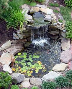 backyard Decorative Pond