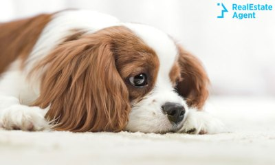 cute dog mourning