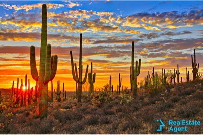 beautiful desert sunset with lovely cactus in background