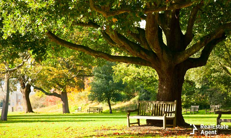 Bench under the tree and a green background