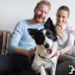 Loving couple taking care of a good doggo