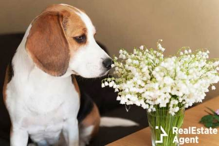Beagle dog bouquet lilies of the valley