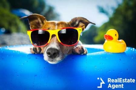Dog on blue air mattres