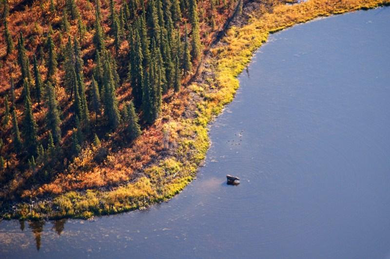 Kobuk Valley Moose, Least Visited National Park