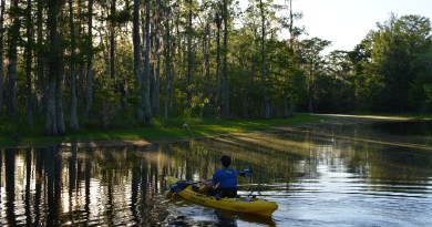 Kayaking in Louisiana cypress swamp bayou