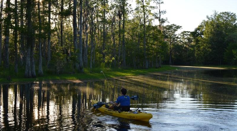 Kayaking in Louisiana cypress swamp bayou