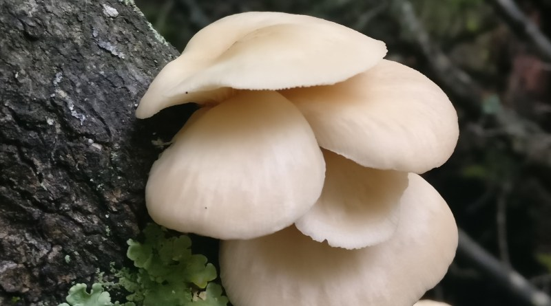The Best Trees to Know for Mushroom Foraging