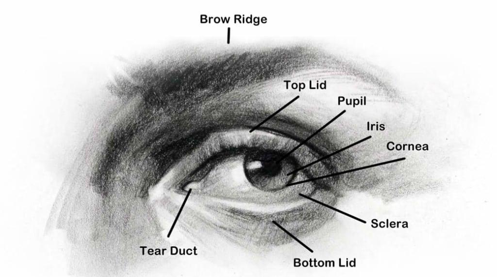 Eye-Anatomy-1040-1024x571