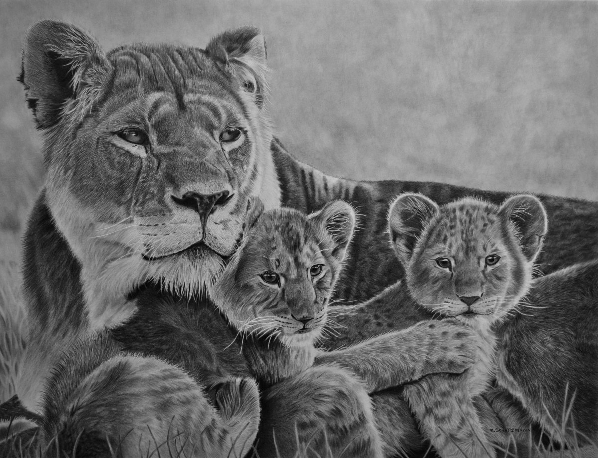Drawings | Realistic Pencil Drawing, Learn How to Draw ...