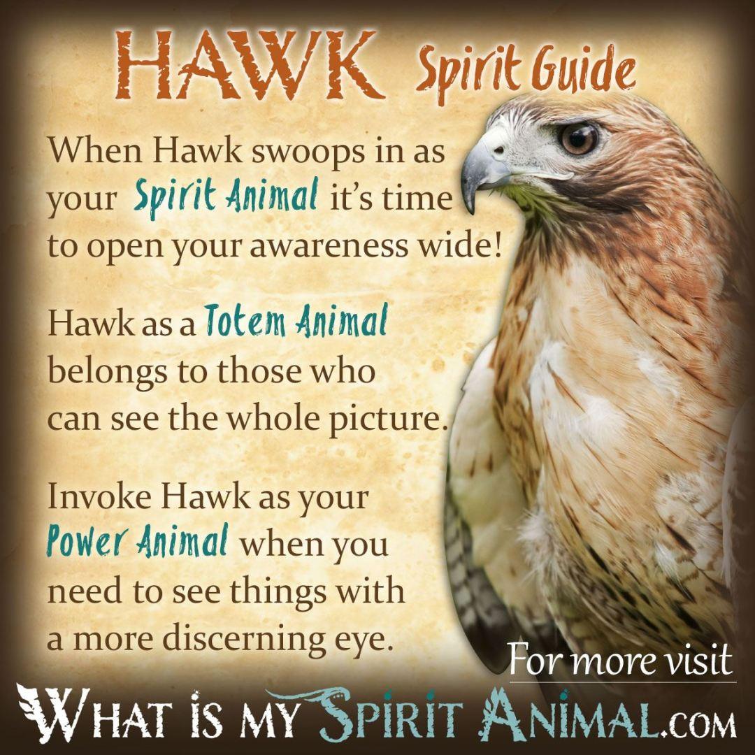 Hawk-Spirit-Totem-Power-Animal-Symbolism-Meaning-1200x1200