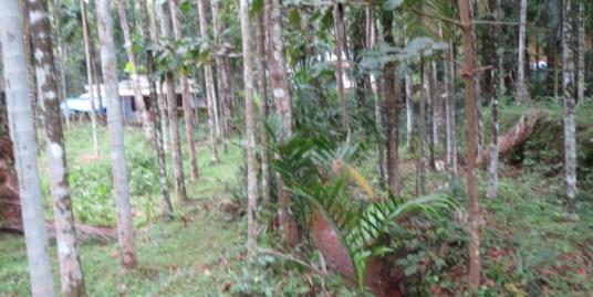 Land for sale at Perambra