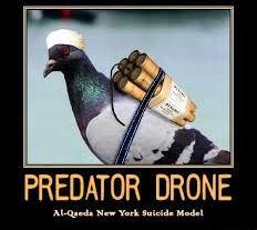 America's Enemies Now Using Carrier Pigeons