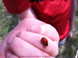 Lady bugs get there name from being Mary's help to farmers, once called Our Lady's bugs.