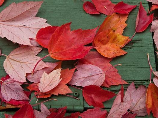 Free Worksheets and Printables for Fall!