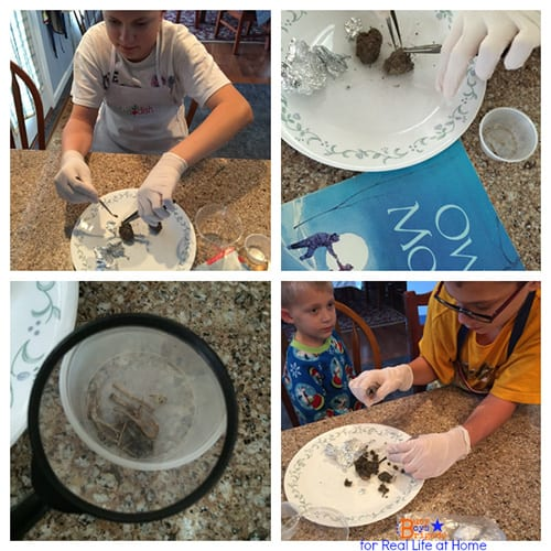 Owl Moon Activities and Printables: Owl Pellet Dissection