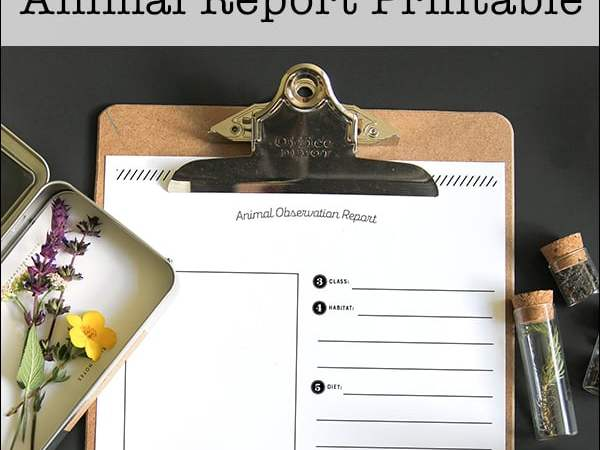 Free Printable Animal Report Template for Kids