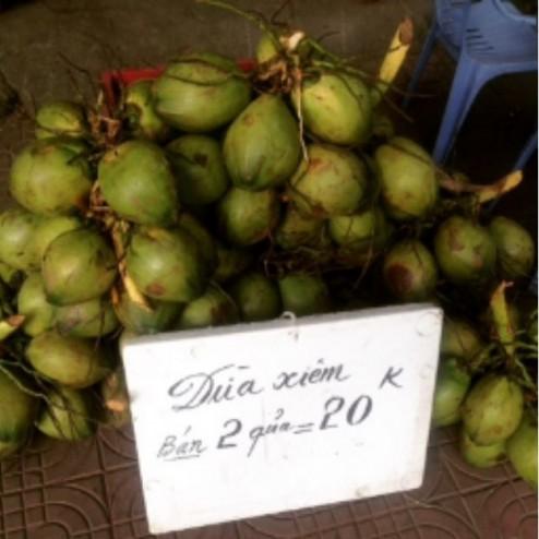 cocnuts in lao cai