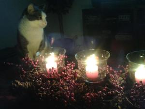 Cat By Candlelight 3