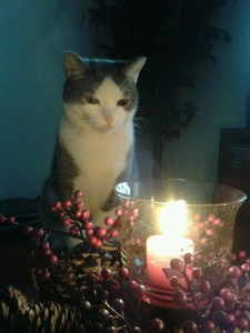Cat By Candlelight 1