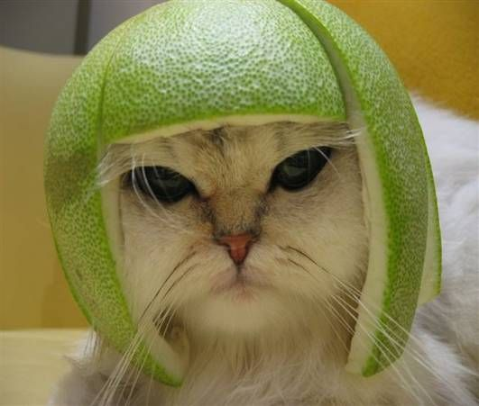Melon Head Cat