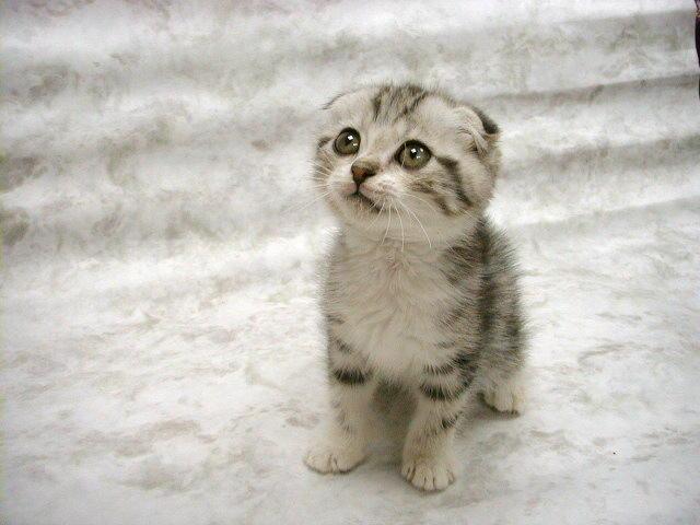 Adorable Cute Cat