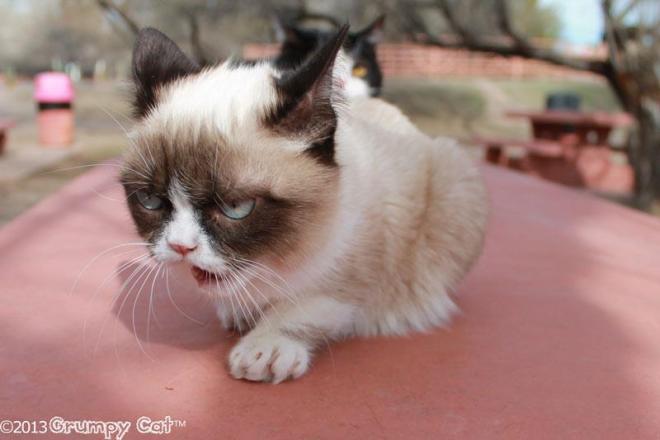 grumpy-cat-roar