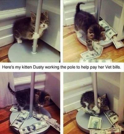 Kitten Pole Dance